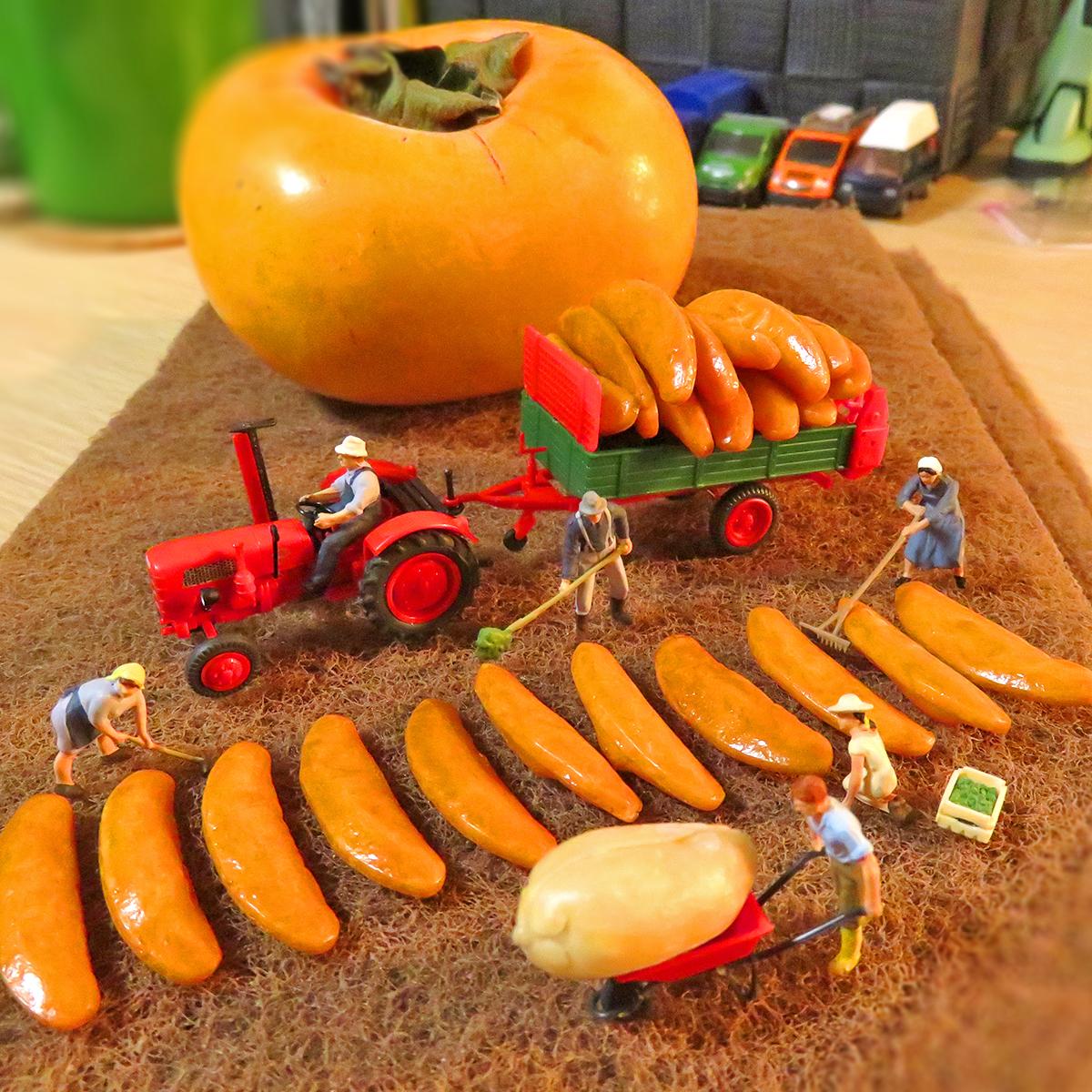 柿の種を植える農作業たち