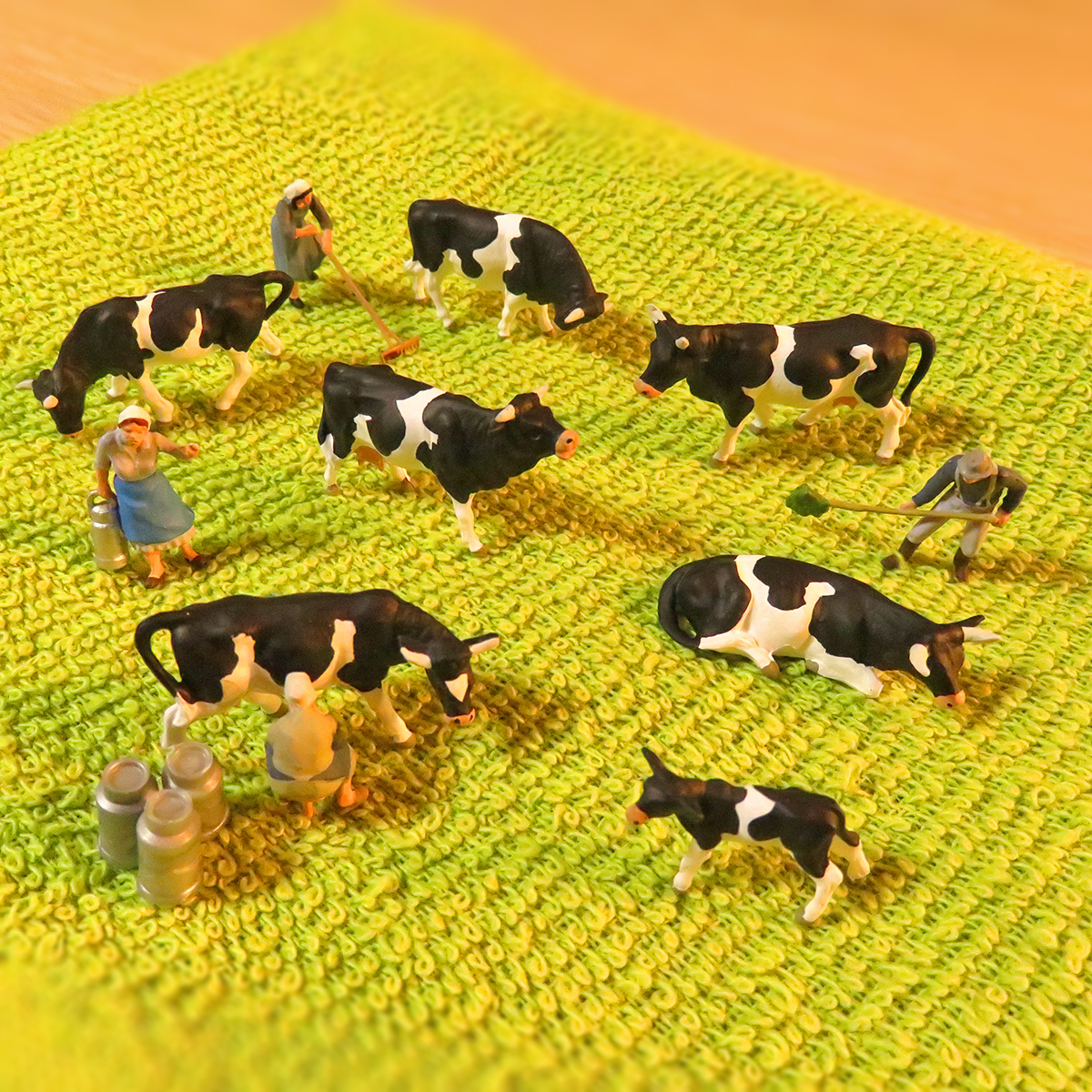 緑のタオル牧場で飼育されてる乳牛と乳絞りする酪農家