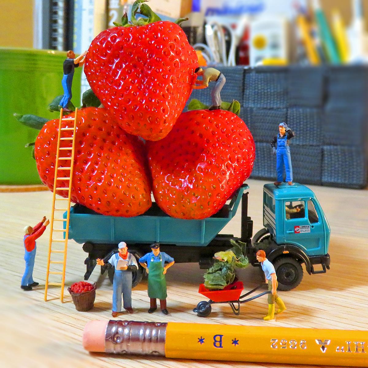 巨大イチゴをトラックに載せて出荷する作業員