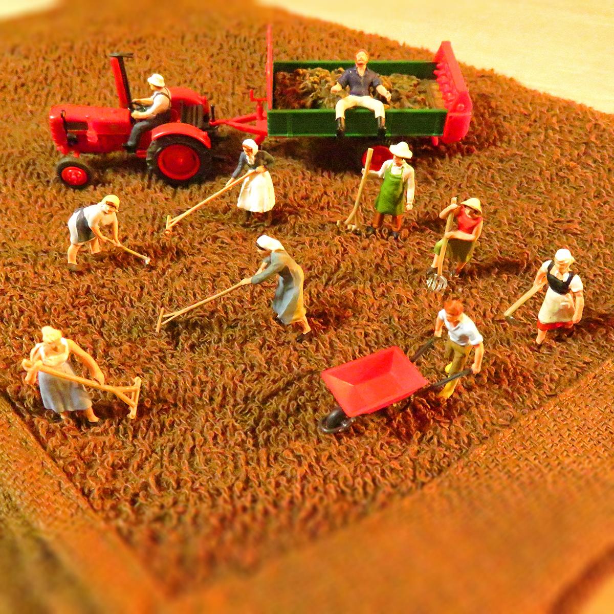 タオル畑の土を耕す農家