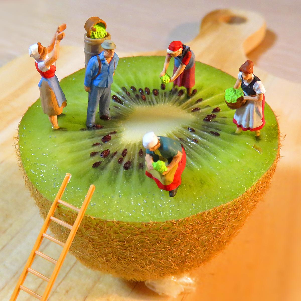 9月1日はキウイの日!巨大キウイを収穫するフルーツ農家