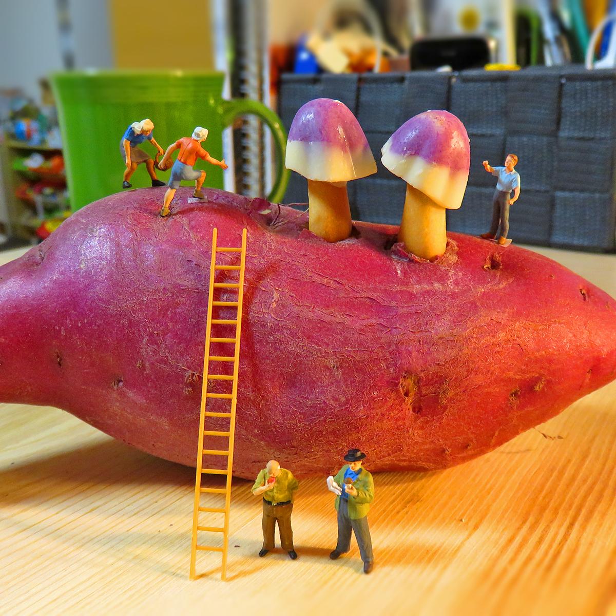 10月13日はサツマイモの日!15日はキノコの日!サツマイモに生えた紫いも味きのこの山を収穫する人達