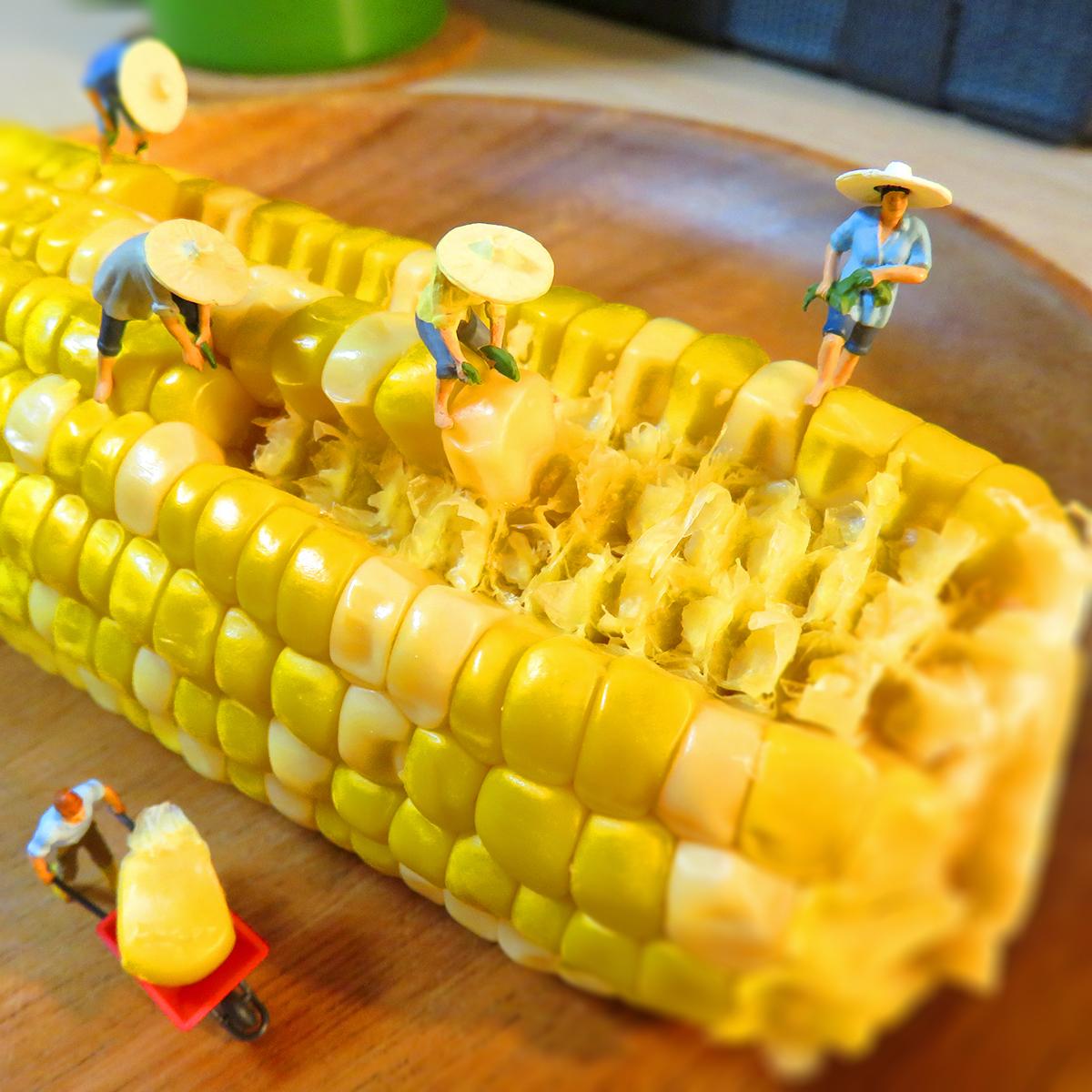 トウモロコシを収穫する農作業員たち