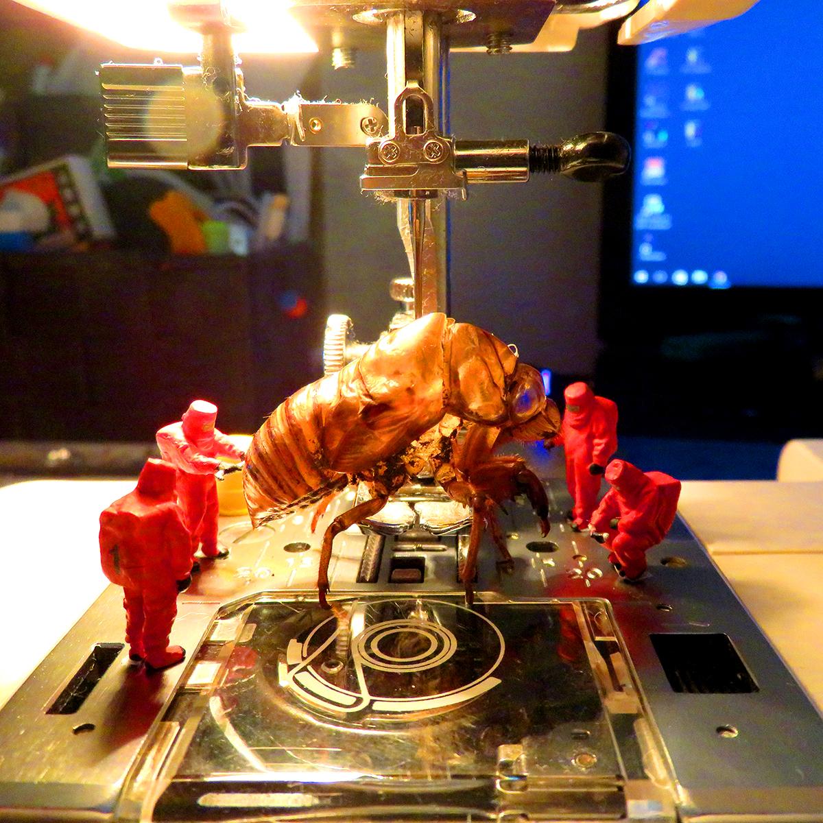 ミシンでセミの脱け殻を研究する特殊研究者たち